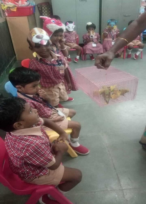 Pre-kg kids are witnessing budgerigar on birds day